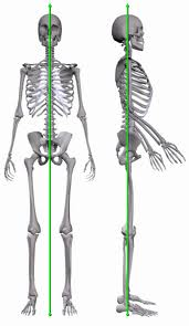 Neutral anatomical alignment as determined by bony position